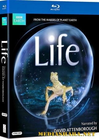 BBC: Жизнь / BBC: Life (2009) BDRip 720р
